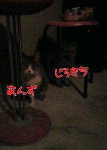 20130817-213729.jpg